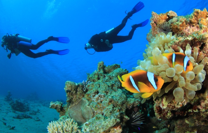 an introduction to the dangers and rewards of scuba diving While both islands have their natural rewards,  i want emails from lonely planet with travel and product information, promotions, advertisements,.